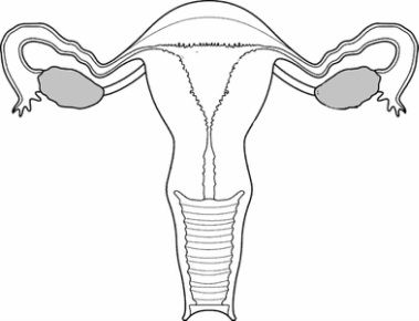 Have you seen the Exquisite Uterus Project on Pinterest or ...