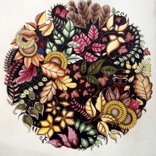 Johanna Basford Colouring Gallery Enchanted Forest Pinterest