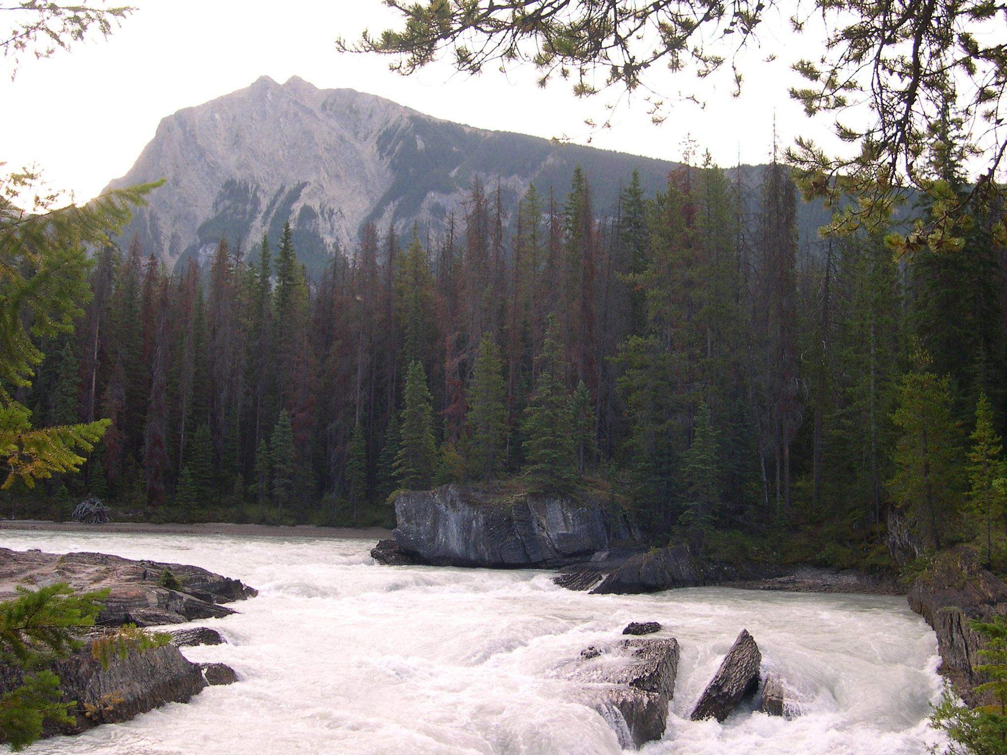 Kicking Horse River with forest and mountains in background - Canada