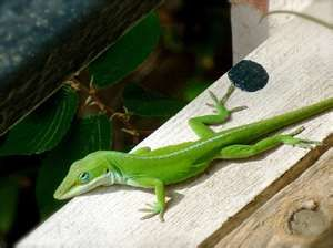 A Porch Lizard In Austin Texas Lizard Make You Smile Texas