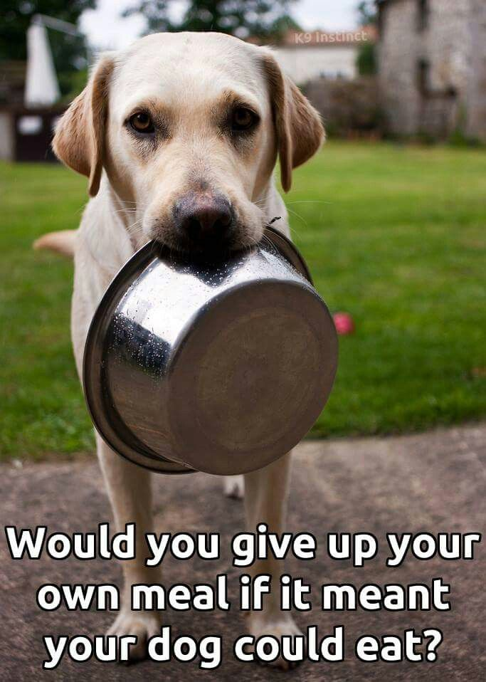 Pin By Krista Werts On Things I Find Beneful Dog Food Dogs Pets