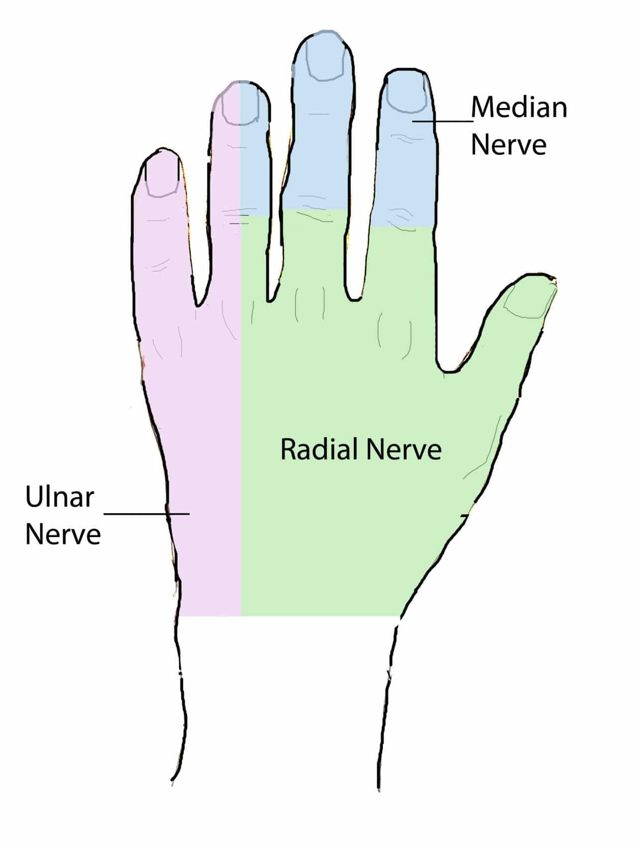 Anatomy Of The Hand Geeky Medics Anesthesia Pinterest Ulnar