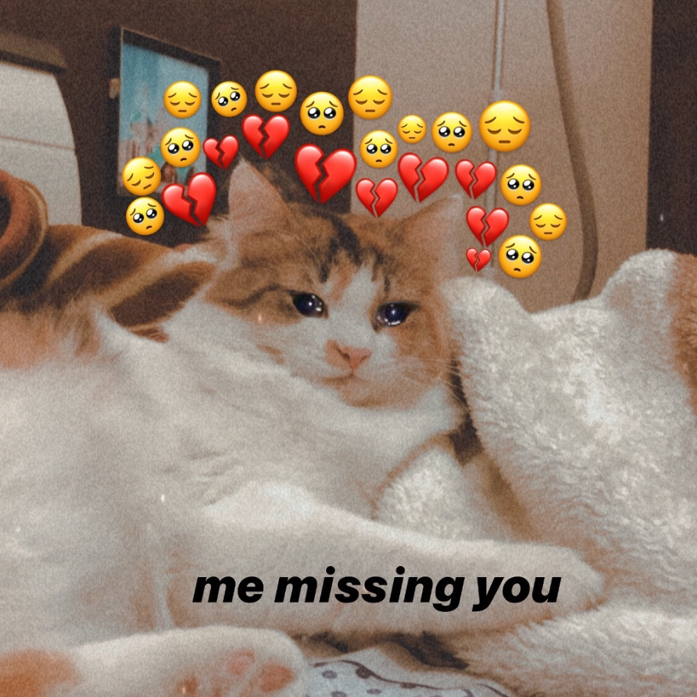 Cat Memes E Crying Immagine Su We Heart It In 2020 Cute Love Memes Memes Funny Faces Cute Messages