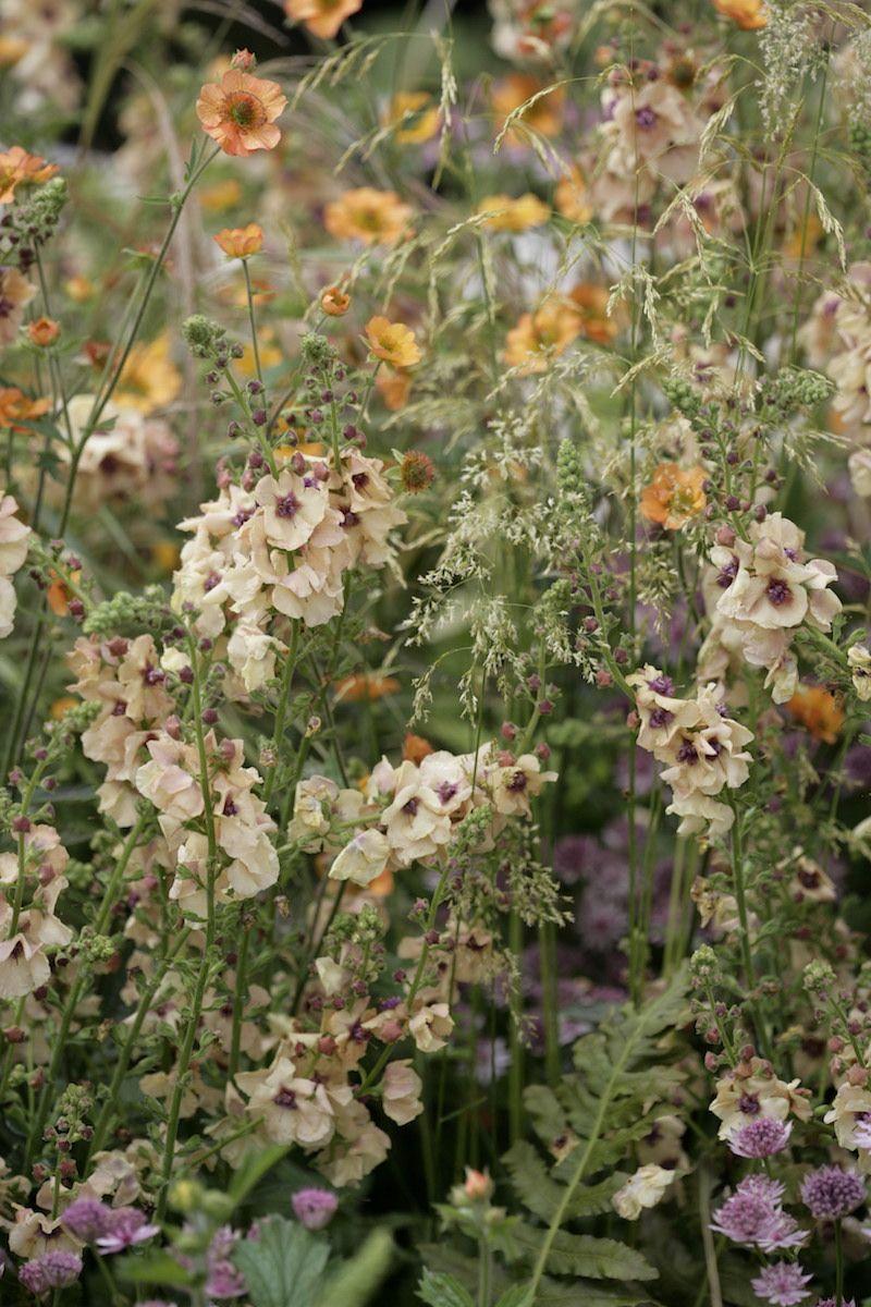 Hampton Court Flower Show 2015/Ann-Marie Powell Gardens   kompozycje ...