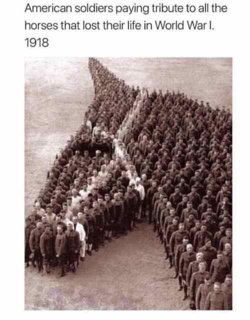 mooie paarden spreuken 14 Wholesome Memes That Will Give You A Good Feeling | Wholesome  mooie paarden spreuken