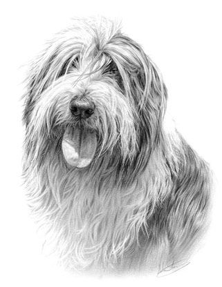 Bearded Collie Bearded Collie Bearded Collie Puppies Dog Portraits