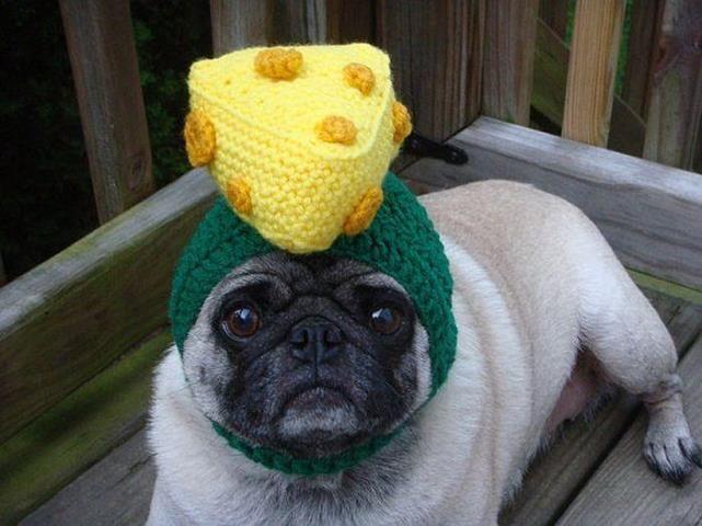 Wisconsin Pug Dog Hat Cute Pugs Pet Costumes
