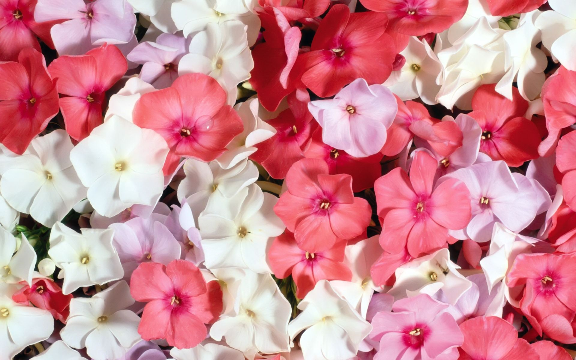White And Pink Flowers Bloemen Pinterest Flower Wallpaper And