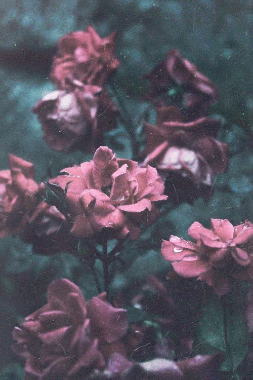 Vintage Flowers Iphone 6 Plus Wallpaper Background