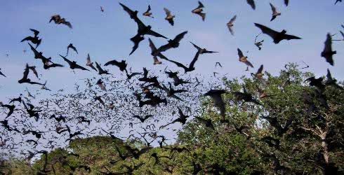 Do your kids like Batman? Visit The Nature Conservancy's Eckert James River Bat Cave in central Texas from May-October for an amazing experience. Photo by Heather Diehl. #kids #summer #activities #nature #bats #texas #whyaustin