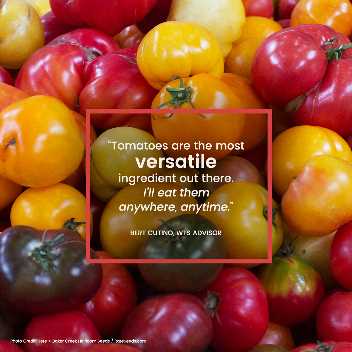 Heirloom tomatoes make for delicious pastas, salads, and sandwiches ...
