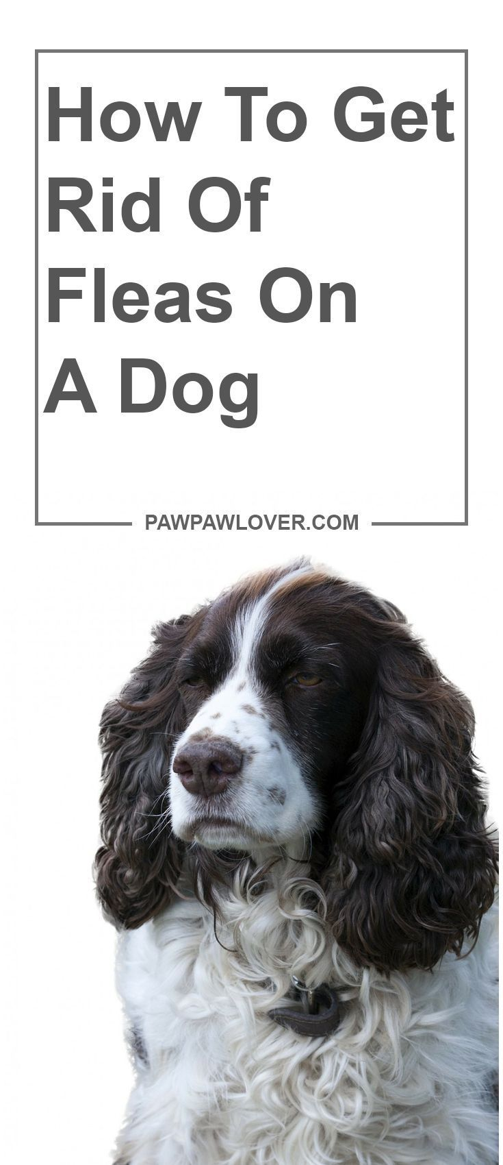 How to get rid of fleas on a dog 11 effective ways to