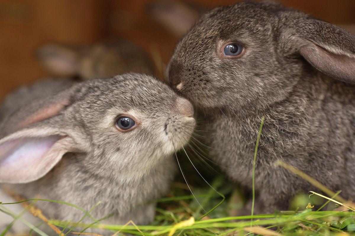 Das Will Dir Dein Kaninchen Mir Seiner Korpersprache Sagen In 2020 Kaninchen Kleine Tiere Ein Herz Fur Tiere