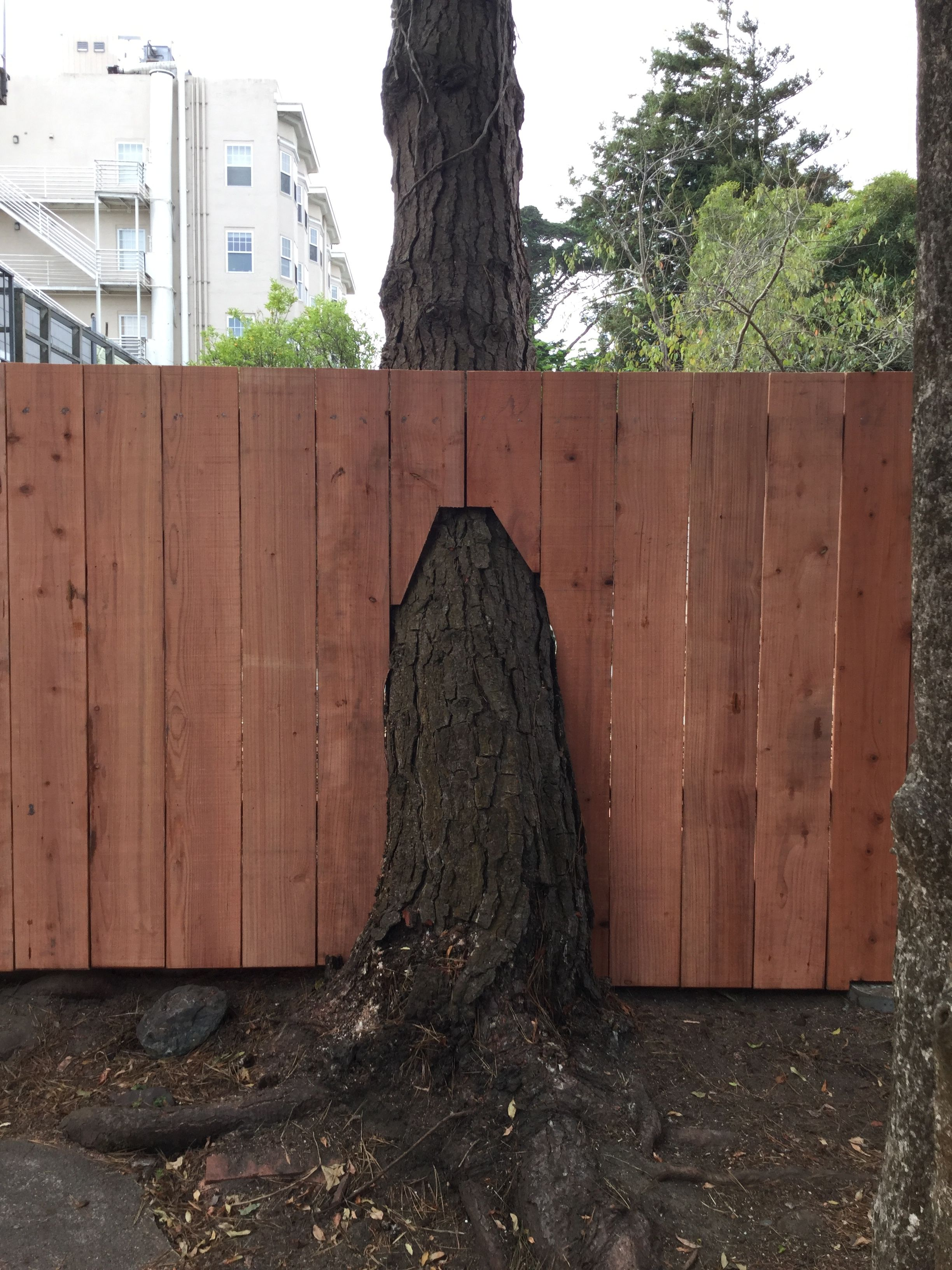 Fence Built Around A Pine Tree Works