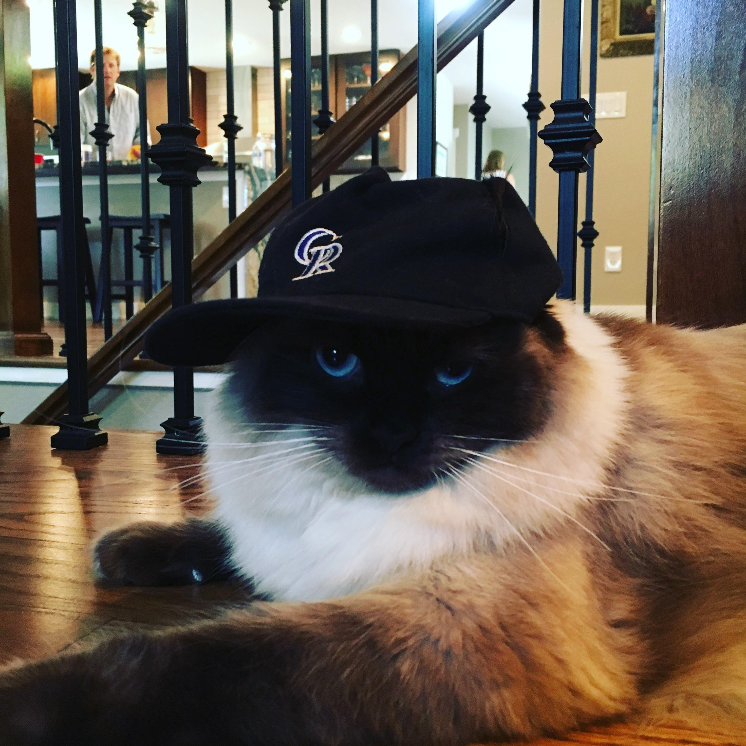 Gangsta Kittens Cutest Cute Cats And Kittens Beautiful Cats
