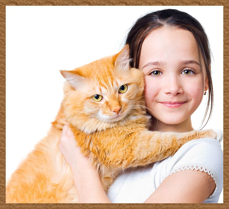 Giveaway Hug a cat day! June 4th!!!! Hug your cat day