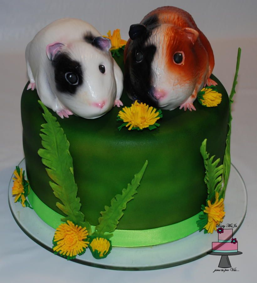 Pin on Guinea pig cakes!