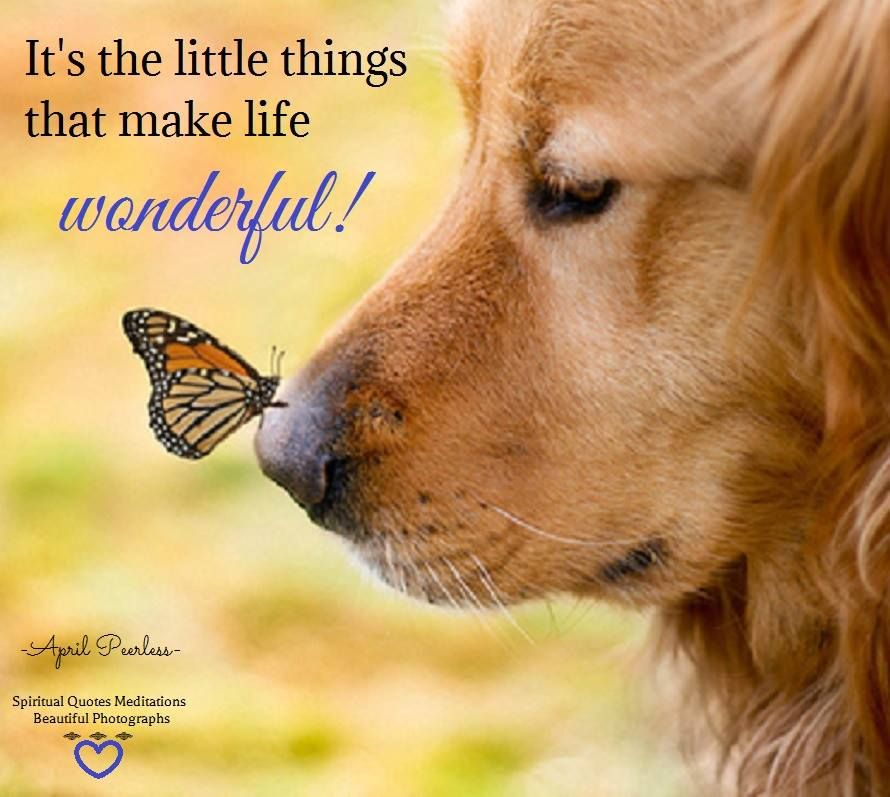 three things i treasure in life The best things in life really are the simple things thanks for the reminder  suzys last blog post20 little things to treasure in autumn reply diane says .