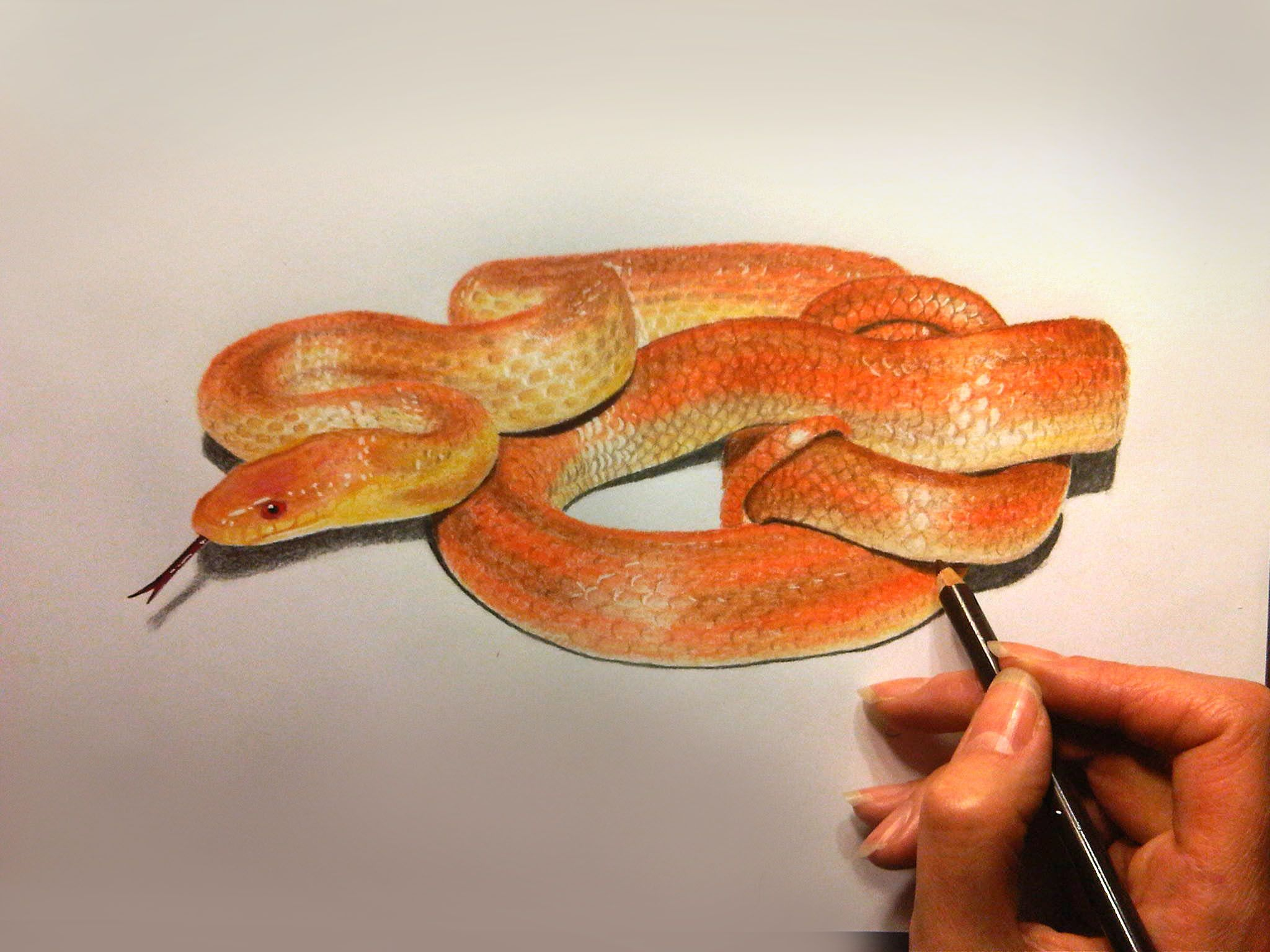 How To Draw A Snake With Colored Pencils 3d Malerei Malerei
