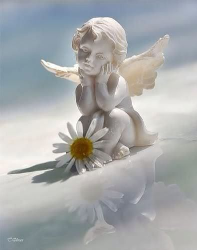 Image result for daisies and angels