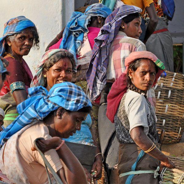 Tee Sammelstelle auf den Teehängen auf Sri Lanka