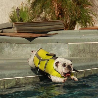 """I've made a huge mistake"" #English #Bulldog"