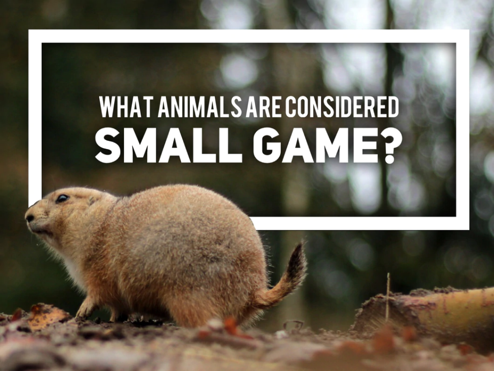 What Animals are Considered Small Game? Small games
