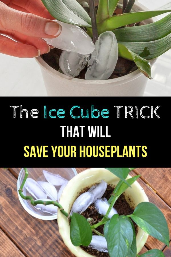 Photo of The Ice Cube Trick That Will Save Your Houseplants