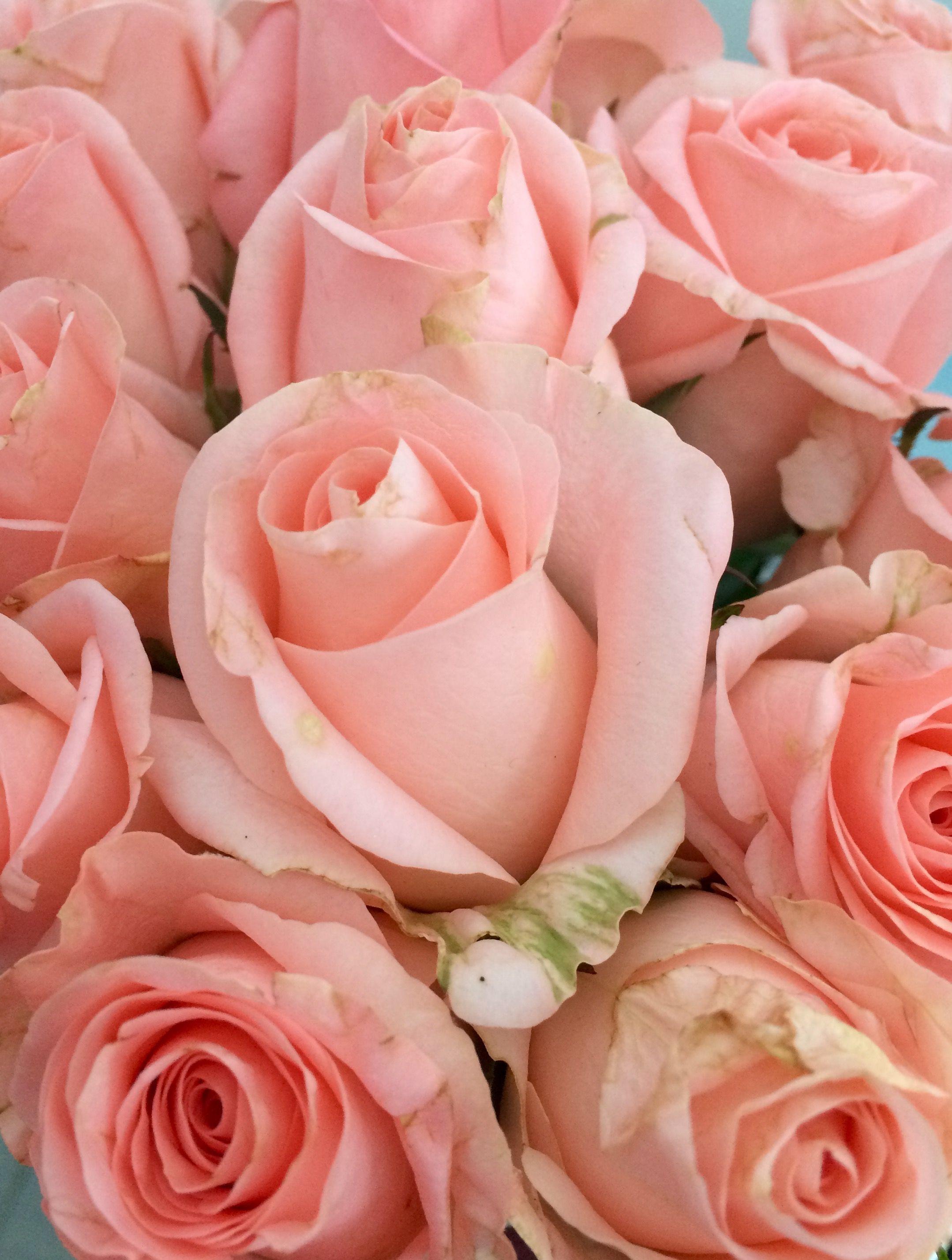 картинки букеты нежно розовые числе удобств всех