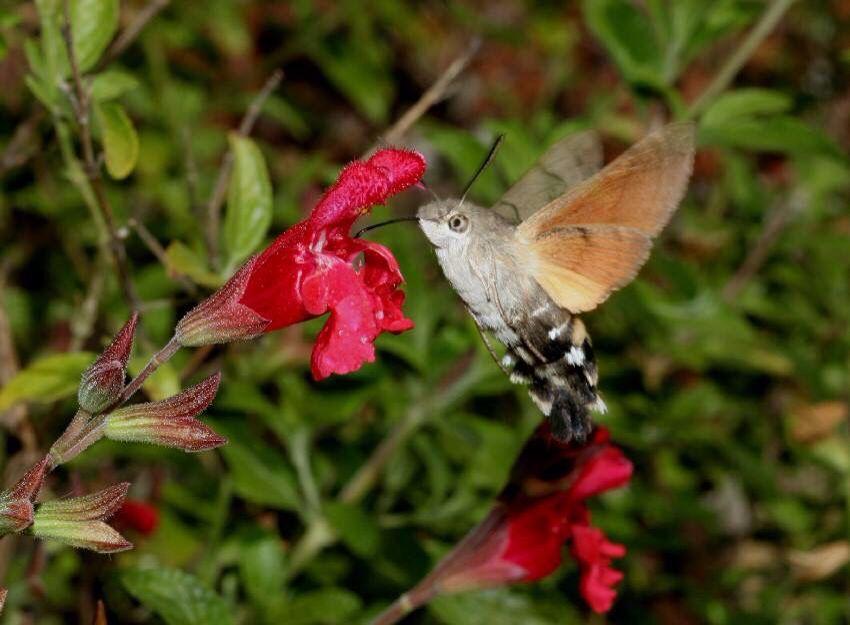 Pin by Elizabeth VandenHeuvel on The Whir of Hummingbird