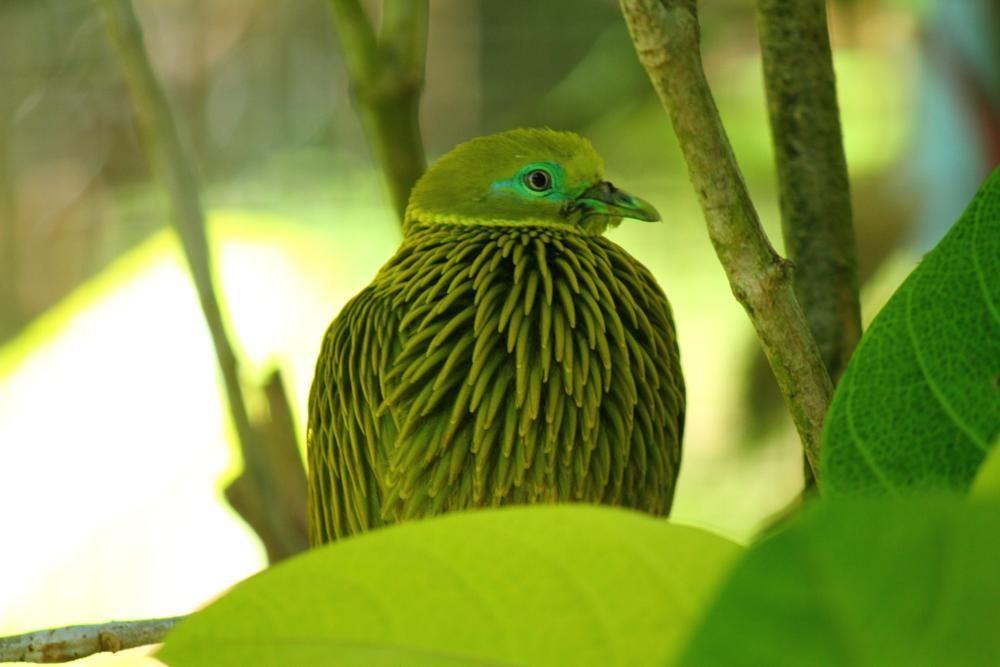 Unique Bird by takashi.mizoguchi