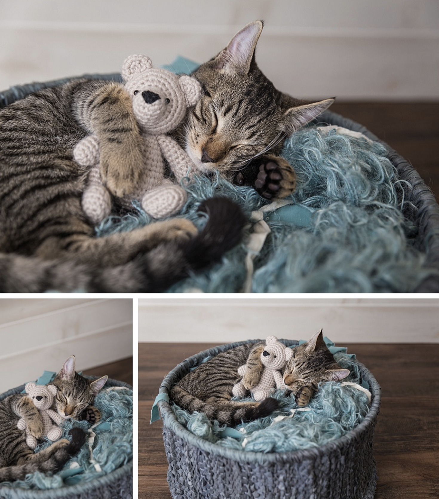Stray Kittens Get Their Own Newborn Baby Photo Shoots Newborn Kittens Kittens