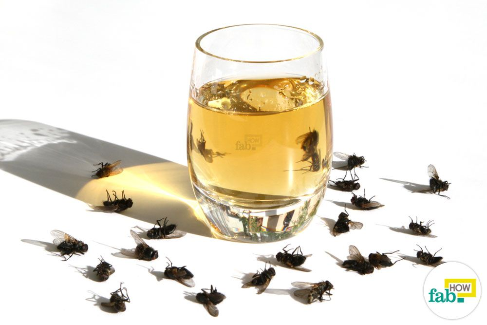 get rid of houseflies (With images) Get rid of flies