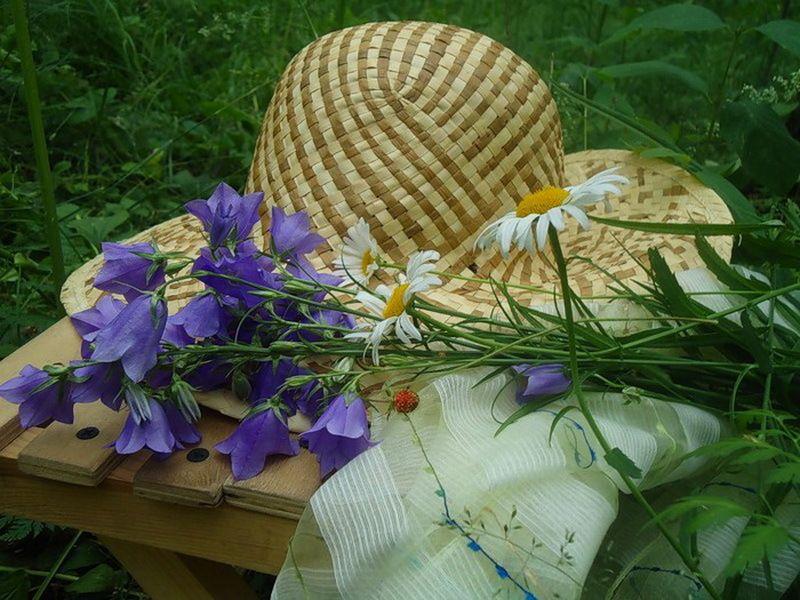 картинки лето шляпа и цветы зря