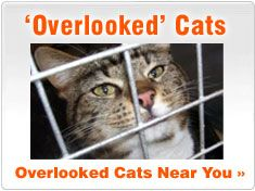 Adopt An Overlooked Cat Cat Adoption Cats Cat Rescue Shelter
