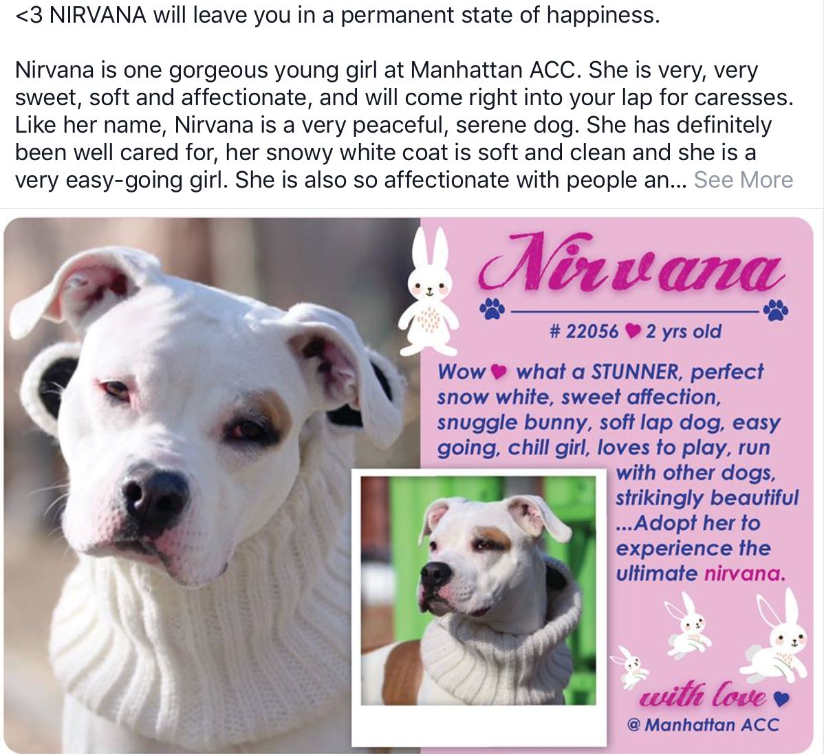 Nirvana Needs Help With Images Foster Animals Glass