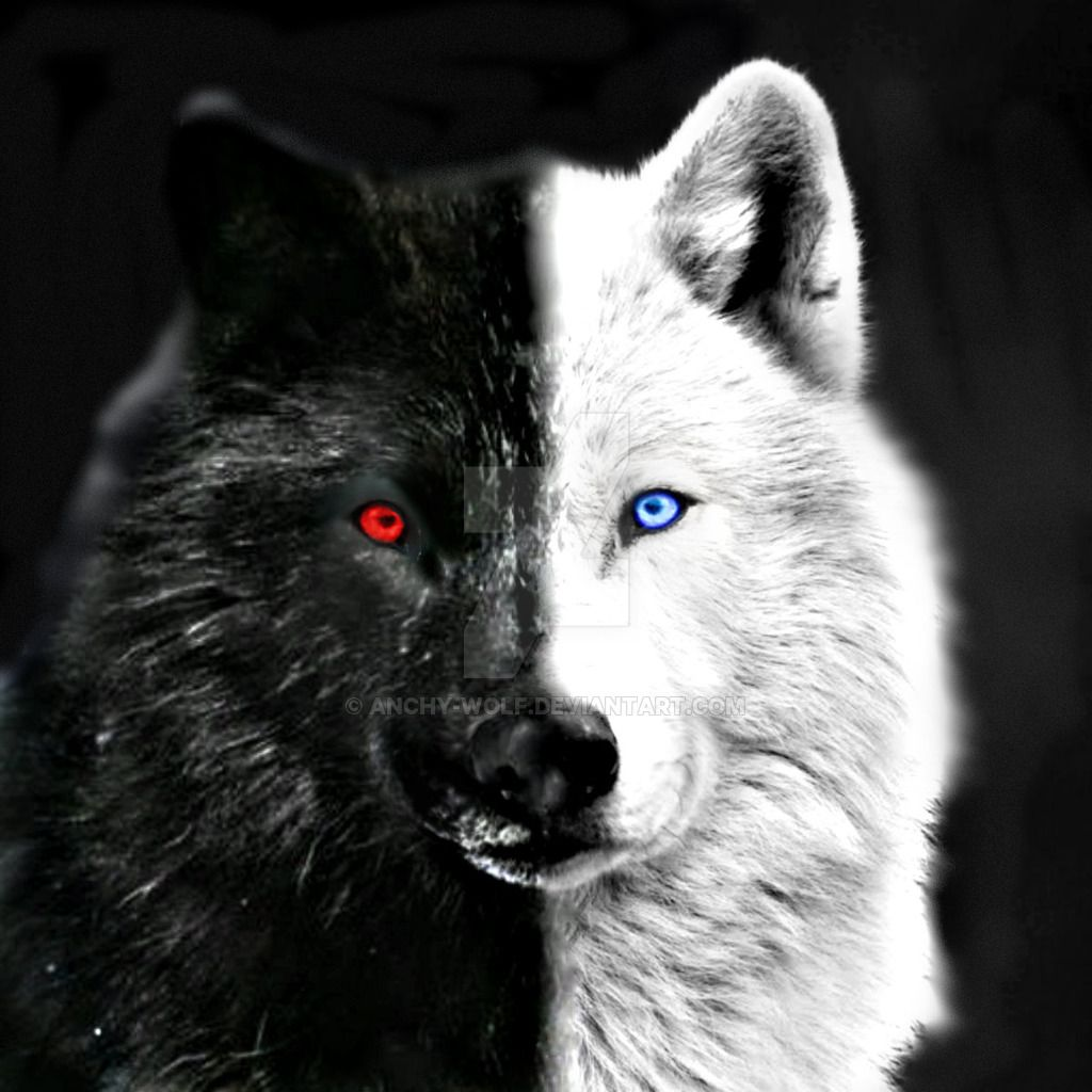 DeviantArt More Like Skoll And Hati _ OffWhite by Anchy