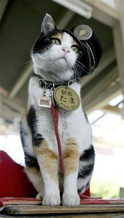 Let's be epic.: Tama Densha and The Cat Train Station Master .Hoy me entere que a los 16 años este gatito famoso de Japón a muerto lo siento