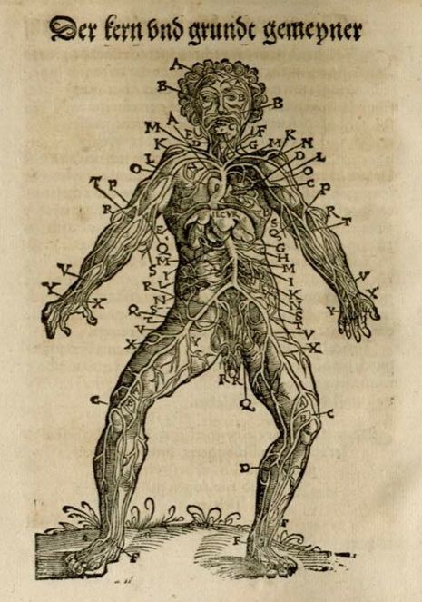 anatomical maps the renaissance artists search for perfection