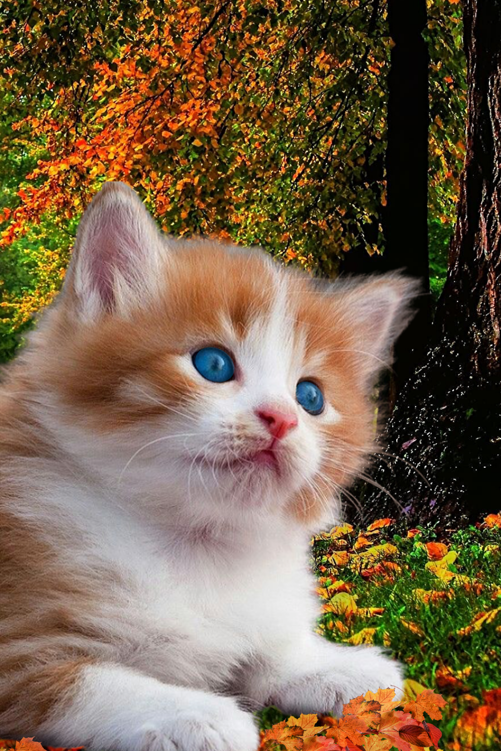 Shiner In 2020 Kittens Cutest Beautiful Kittens Cute Cats And Kittens