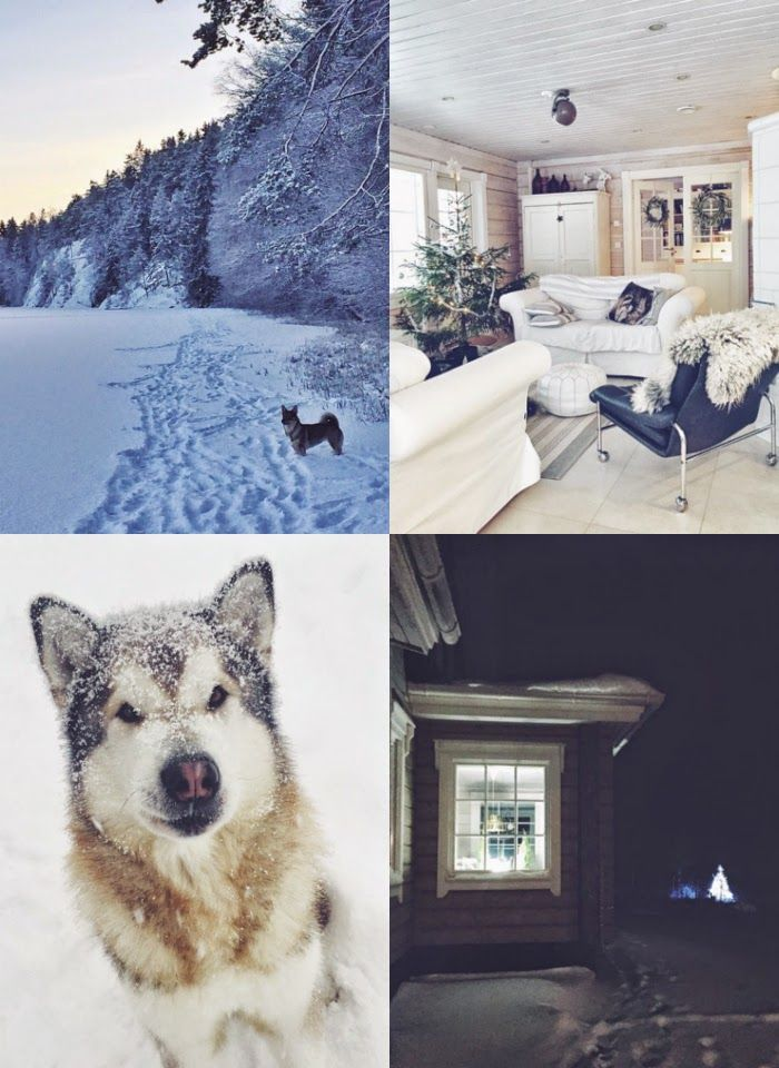 winter, snow, finland, log cabin, log house, hirsitalo, alaskanmalamute, forest, winter wonderland, visit finland, tarja's Snowland