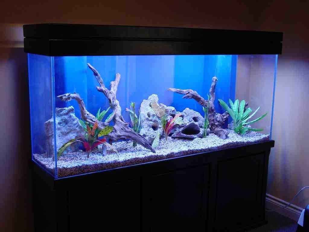 Freshwater fish tank yellow water - Freshwater Aquarium Decoration Ideas