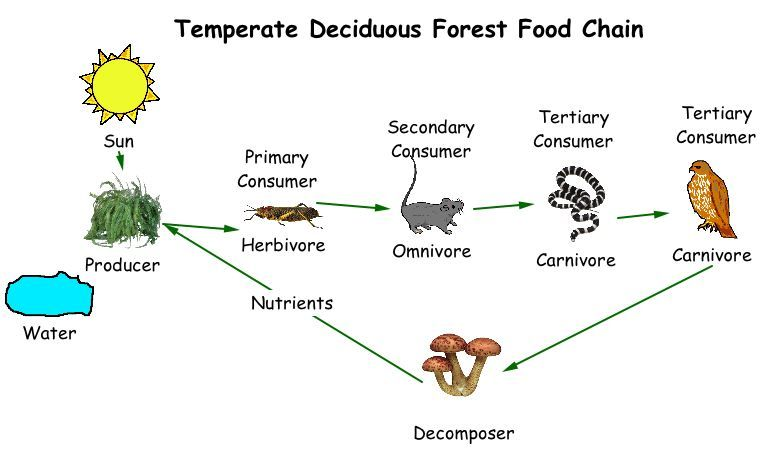 Heights Technology Blog Foodchain Food Chain Food Web Forest Ecosystem