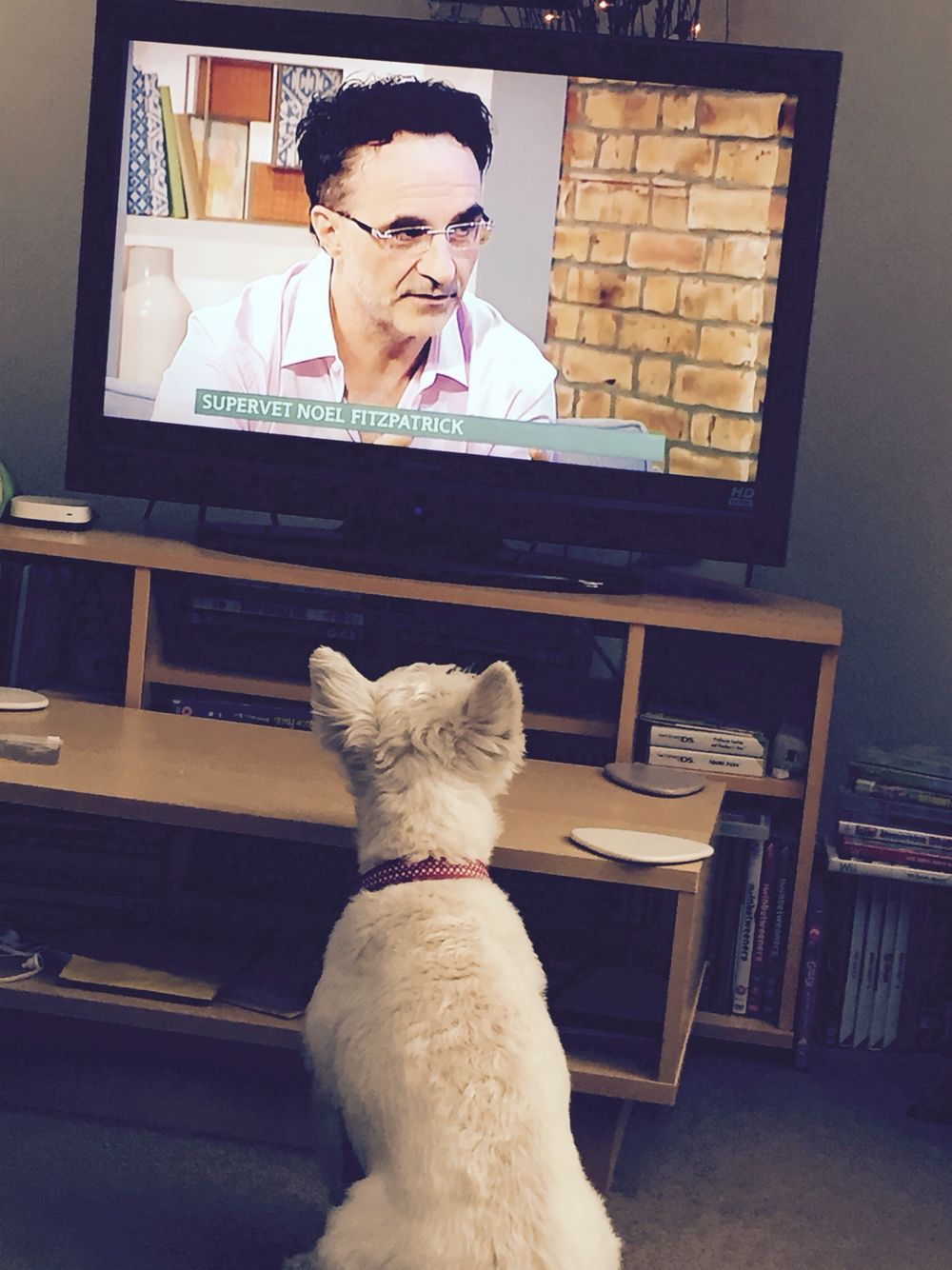 17 best images about supervet professor cats and 17 best images about supervet professor cats and jersey