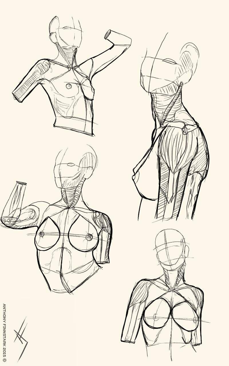 Body sketch female bust by AnatoFinnstark
