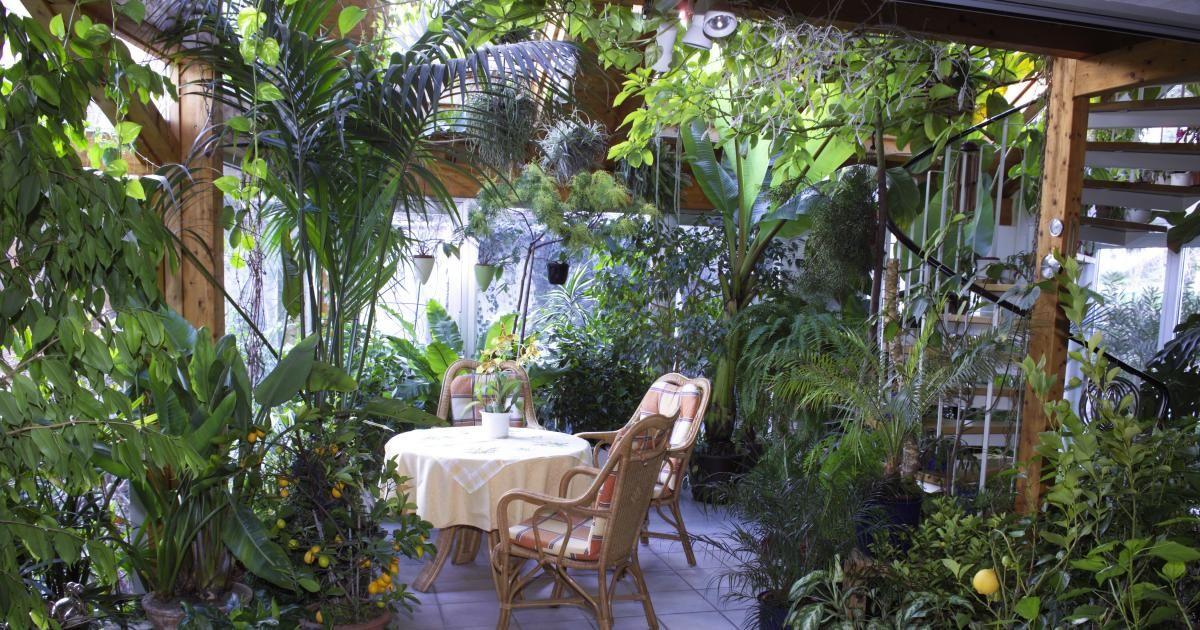 Wintergarten - Pflanzen, Gestaltung und Tipps   Wintergärten ...