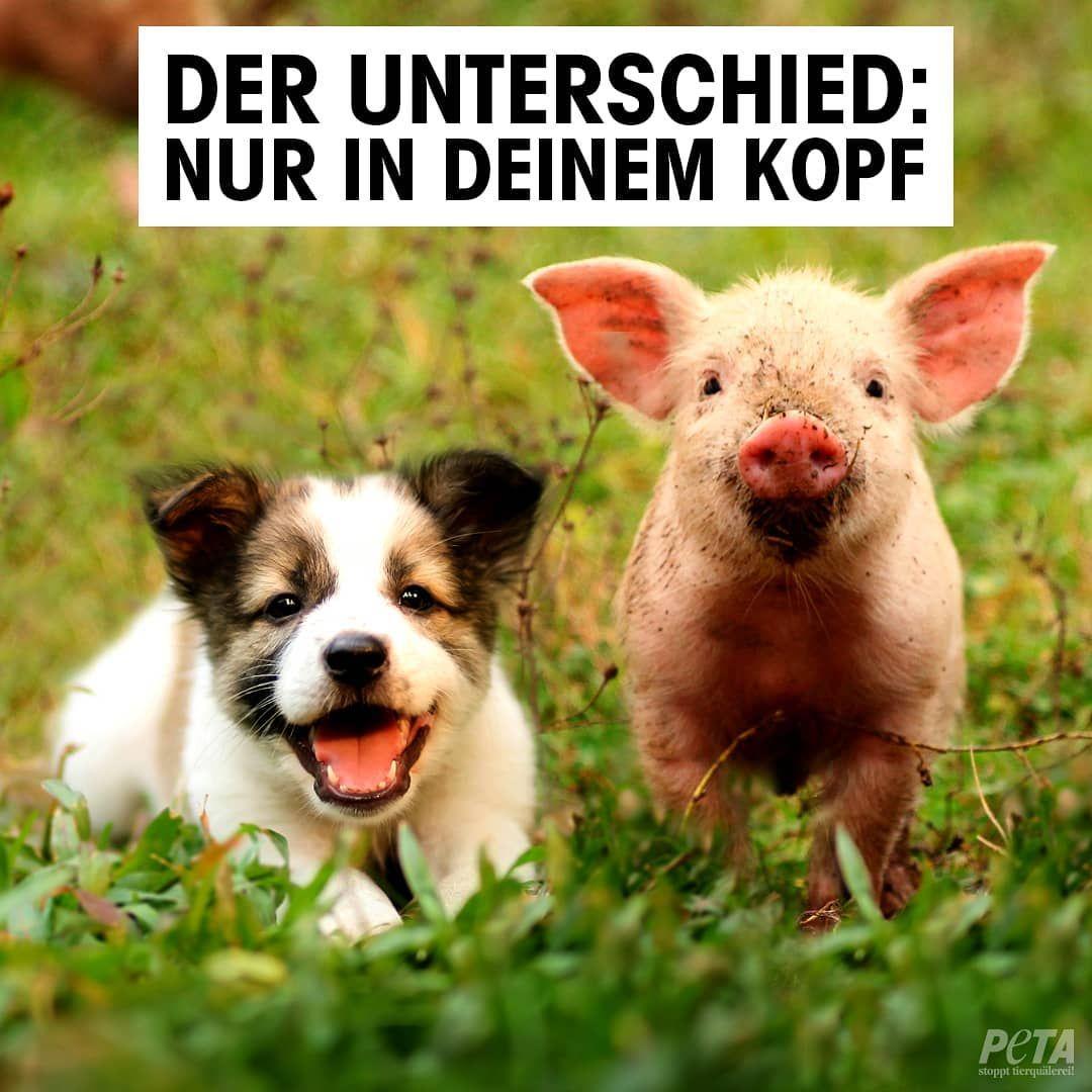 """Photo of PETA Deutschland on Instagram: """"Kein Tier hat Bock drauf, für dein Essen zu sterben!"""""""