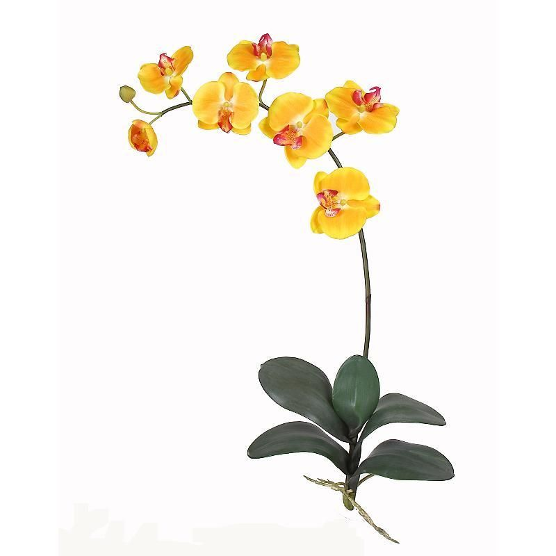 Pin By Samantha Guidi On Creative Silk Orchids Orchid Flower Phalaenopsis