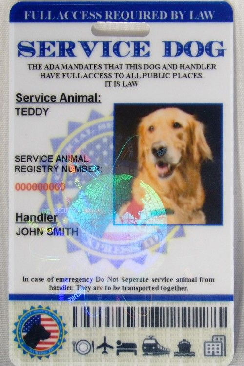 Service Dog Id Custom Holographic Service Dogs Dog Id Dogs