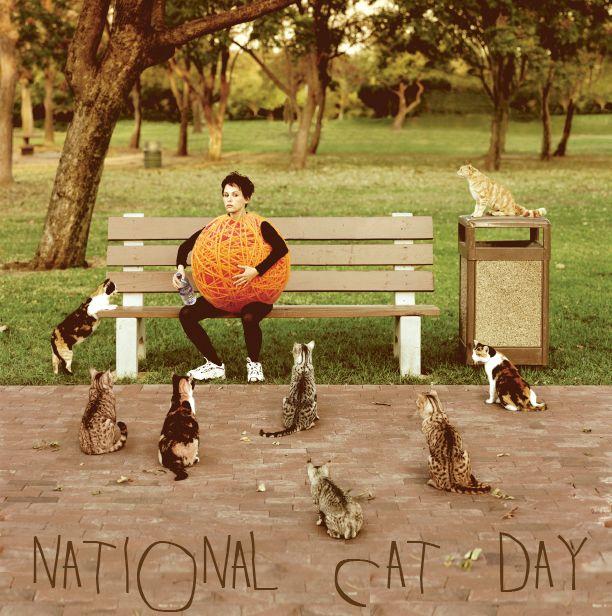 16bd3f74b5071a965ef447d1d9dd6731 hey internet, guess what? it's national cat day october 29, cat